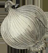 onion_200x221